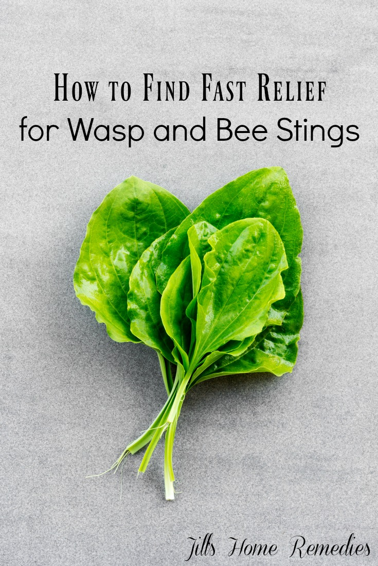 How to Find Fast Relief for Wasp and Bee Stings