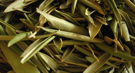 how to make olive leaf tea at home