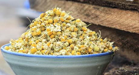 chamomil-flower-update