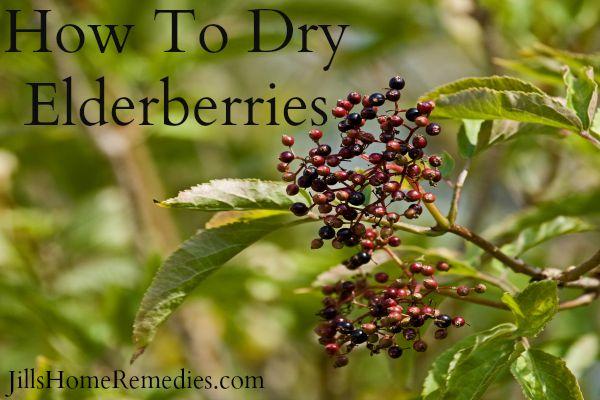 dry elderberries