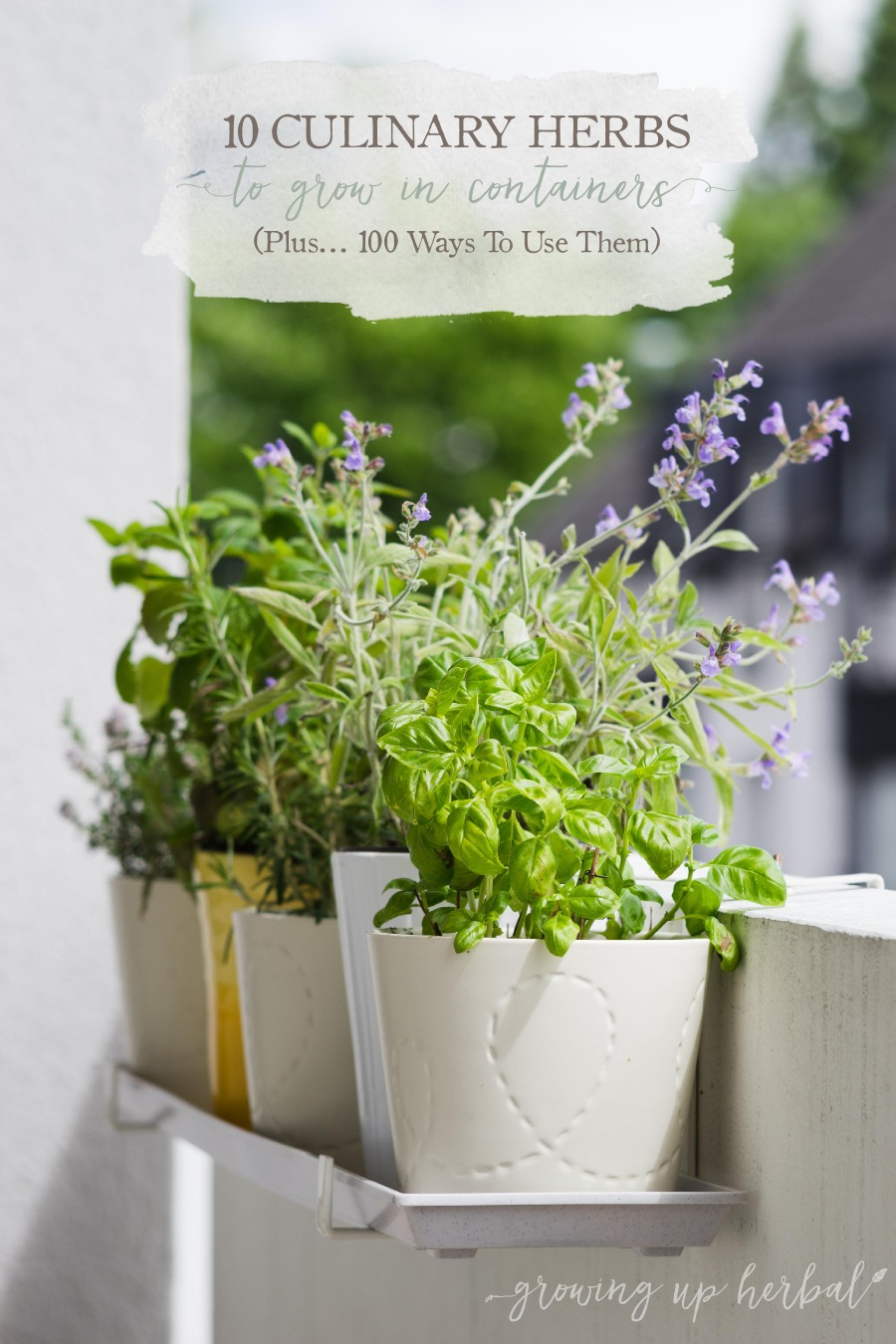 10 culinary herbs to grow in containers plus 100 ways to use them jill 39 s home remedies. Black Bedroom Furniture Sets. Home Design Ideas