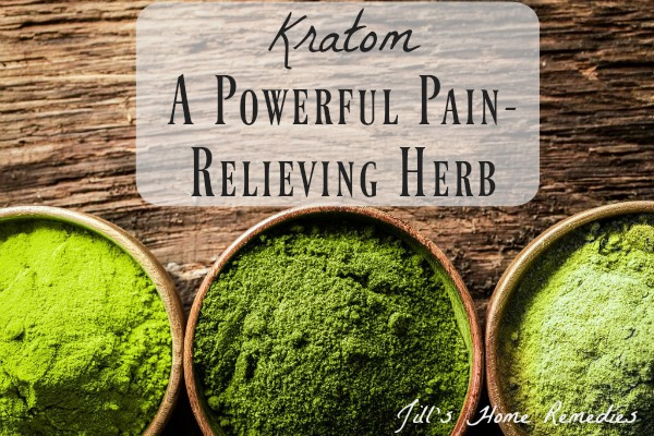 Kratom: A Powerful Pain-Relieving Herb | Jill's Home Remedies | Are you looking for a natural pain-relieving remedy? Give kratom a try as a powerful pain-relieving herb!