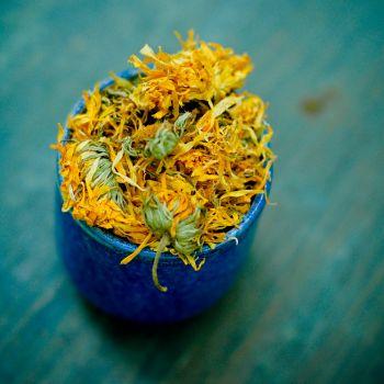 calendula-flowers-2016_1